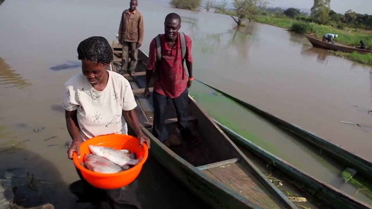 schistosomiasis tó victoria kerek férgek hányása