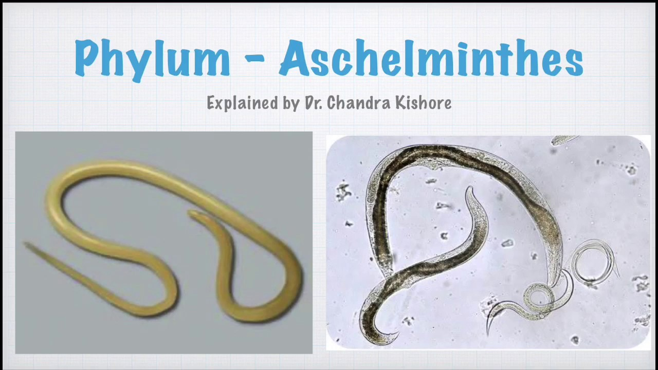 Aschelminthes phylum A helmintikus invázió diagnosztizálása