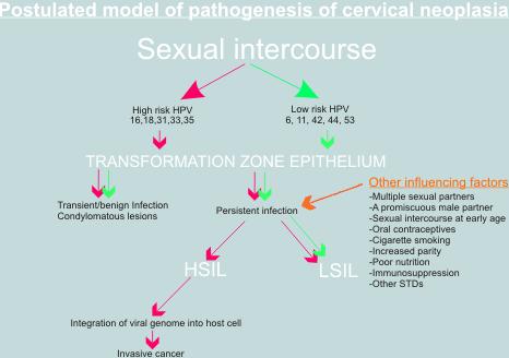 a lapos cervicalis condyloma kezelése
