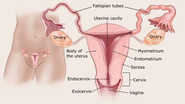 diagnosztikus endometrium rák