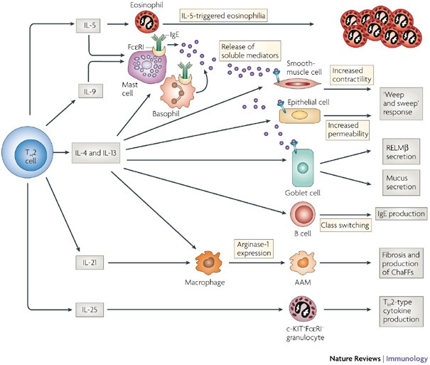 immunreakció a helmint fertőzésre