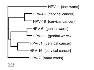 hpv magas kockázatú inkubáció)