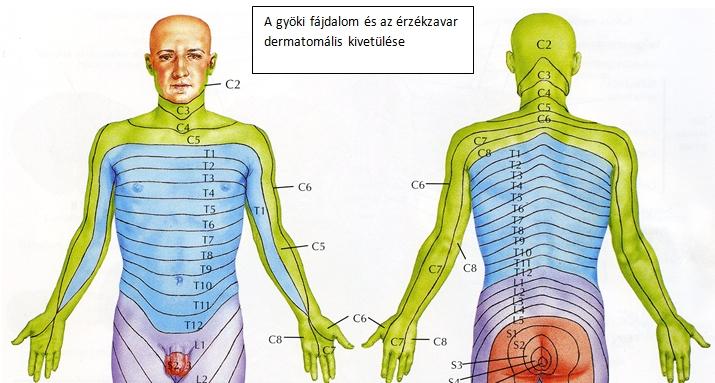 A nyaki gerinc sérülése: tünetek, kezelés és következmények - Masszázs -