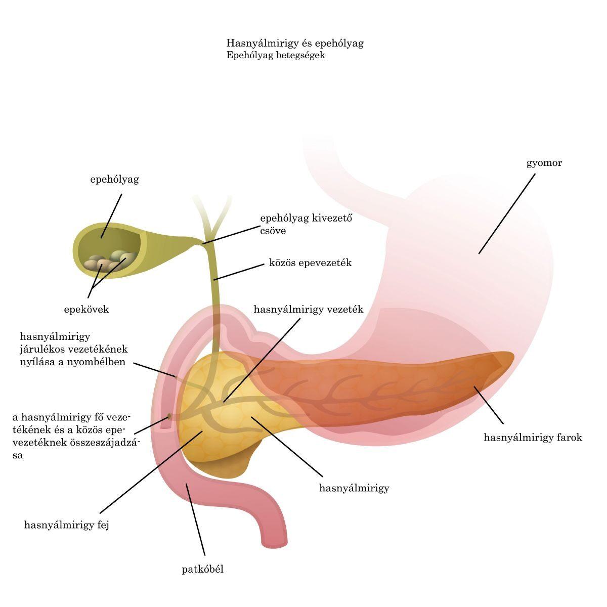 A szubkután paraziták tünetei, Szubkután parazita embereken tünetek kezelése