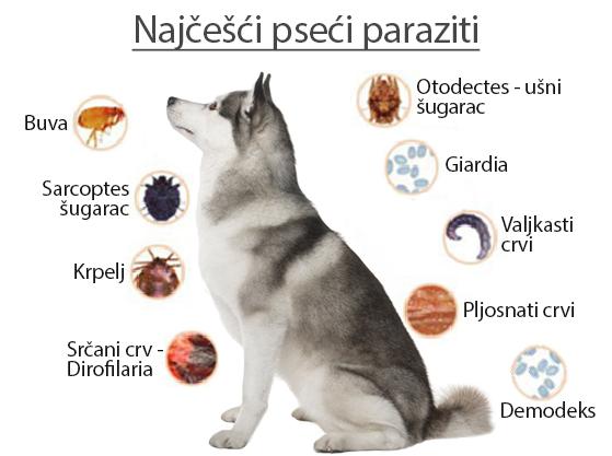 parazita kód psa)