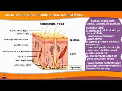 hipoderm parazita szemölcs kezelés bőrgyógyász