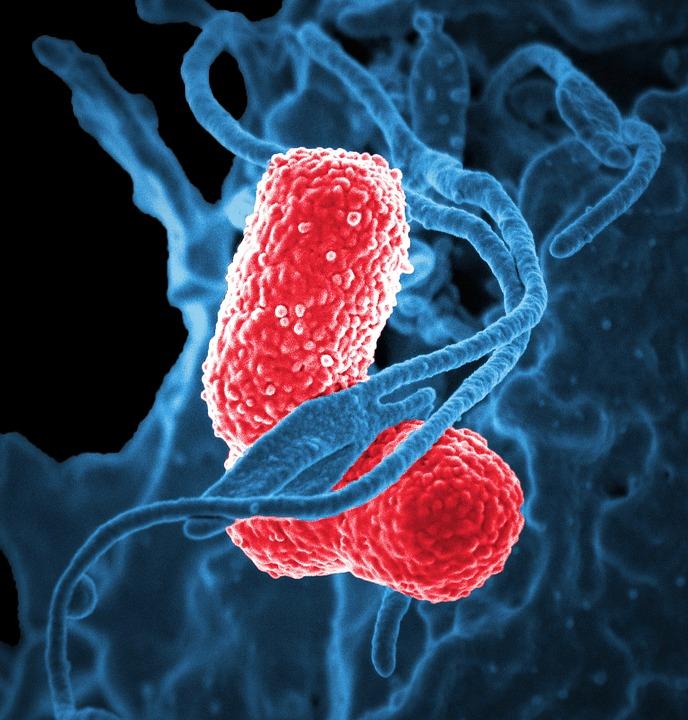 rossz baktériumok hpv magas kockázatú genotípus sp