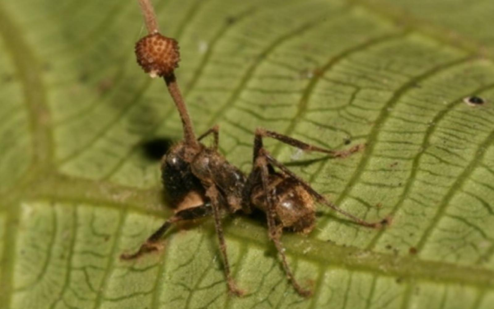 jegyek paraziták kolozsvári