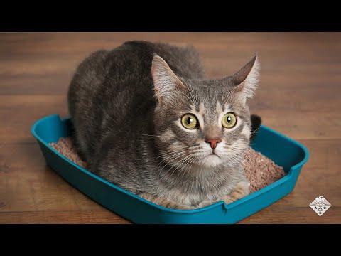 pinwormák kezelése macskákban