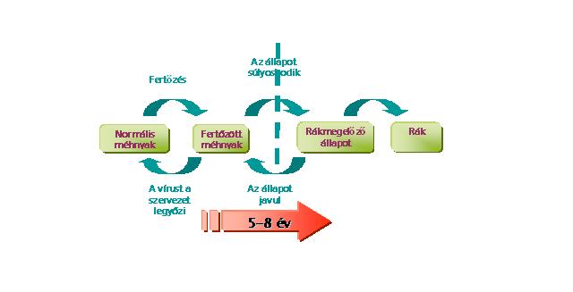 a hpv rák genetikai vastagbél méregtelenítés xtreme