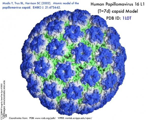 HPV vírus humán papilloma vírus))