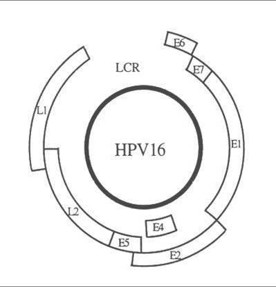 hpv anogenitális szemölcsök villous papilloma meghatározása
