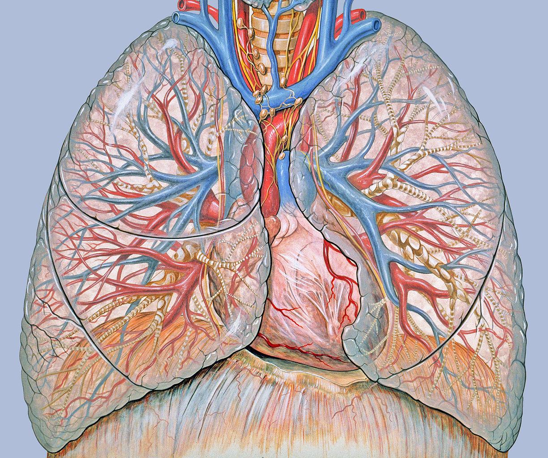 a tüdőrák gyógyul)