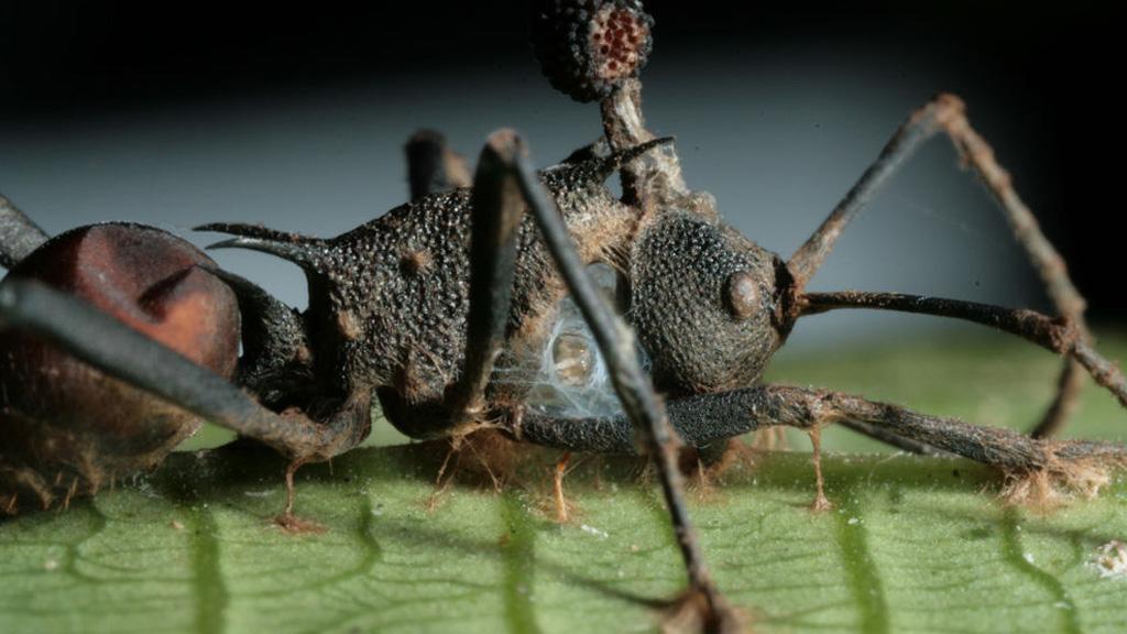 a legbrutálisabb paraziták