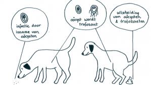 giardia honden