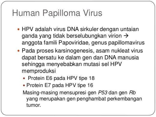 HUA2 - Eljárás humán papillomavírusszerű részecskék előállítására - Google Patents