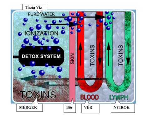 méregtelenítés ionizált vízzel antitestek a kerek spirál ellen