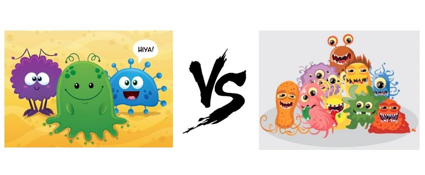 A jó és a rossz baktériumok harca – a bélflóra szerepe az egészségben
