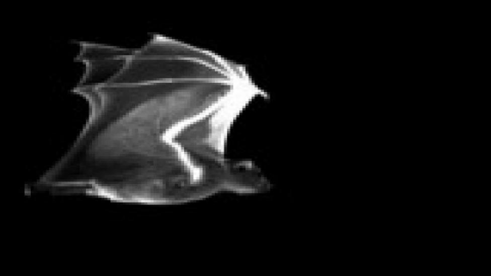 a papillómák az egész testben okozzák és kezelik