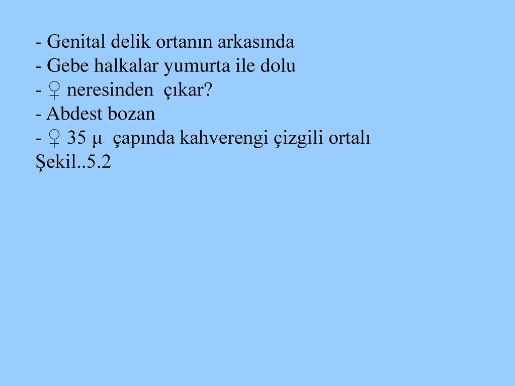 mit jelent görögül a helmintus)