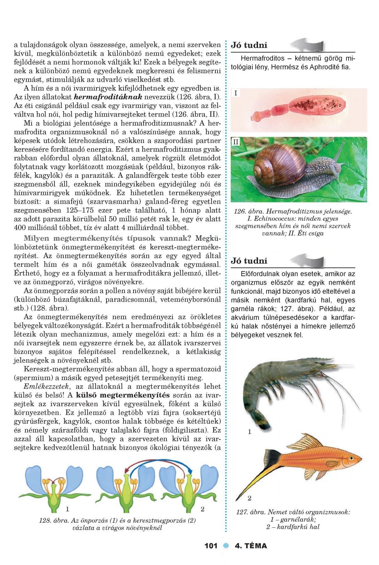 a paraziták a puhatestűek példái)