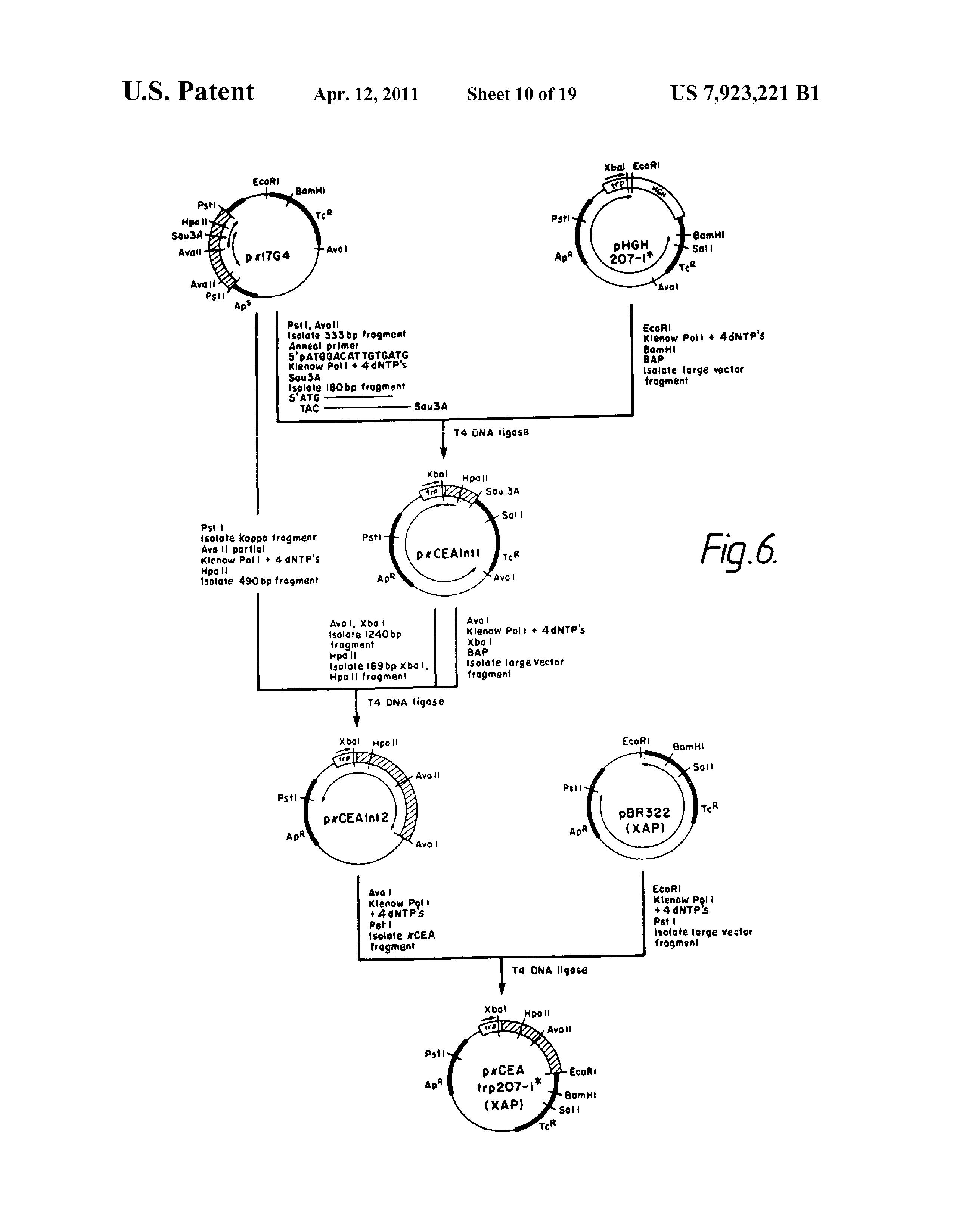 papilloma vírus fórum
