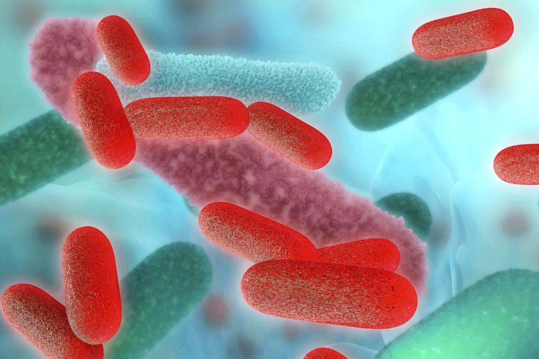 rossz baktériumok enterobiasis vagy enterobius