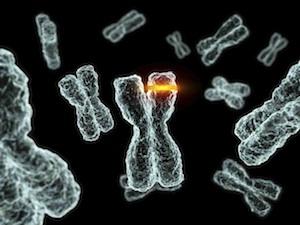Rák: génjeinkben hordozzuk a sorsunkat?