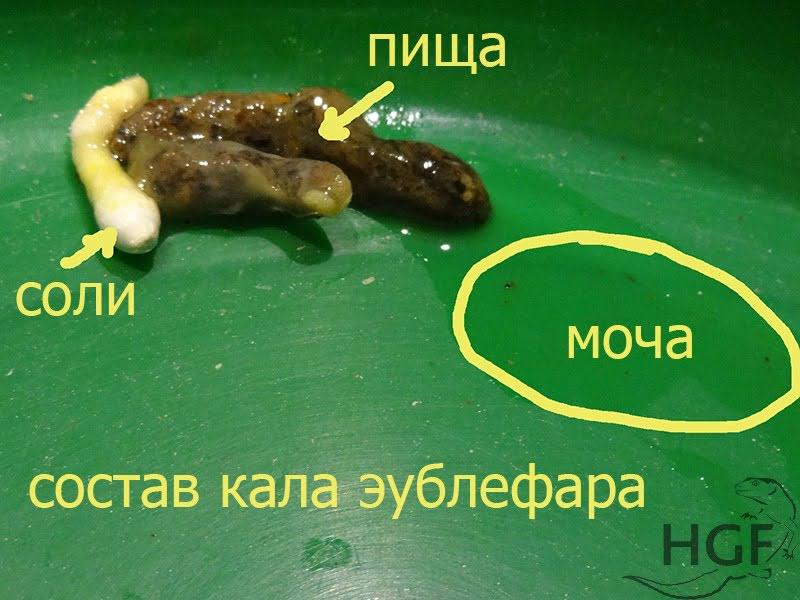 Parazitaölő készítmények. Termékajánló