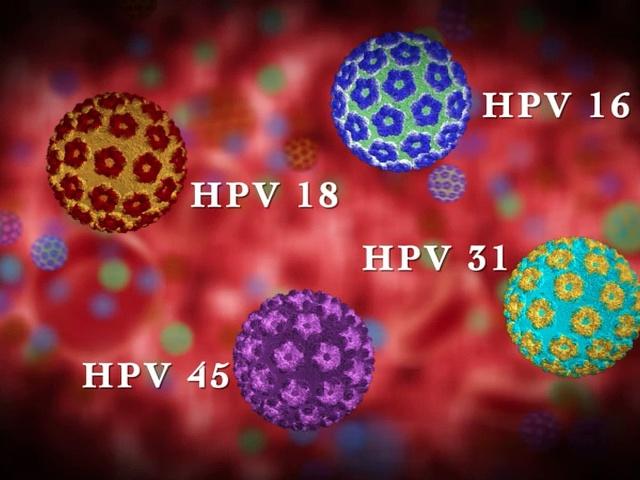 humán papillomavírus hpv kimutatása)