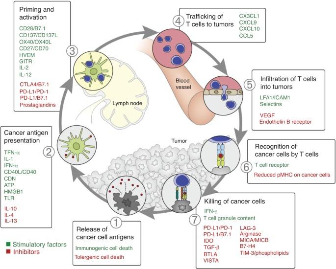 Emberi papillomavírus fertőzés