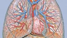 A húgyhólyag papilláris urotheliális karcinóma