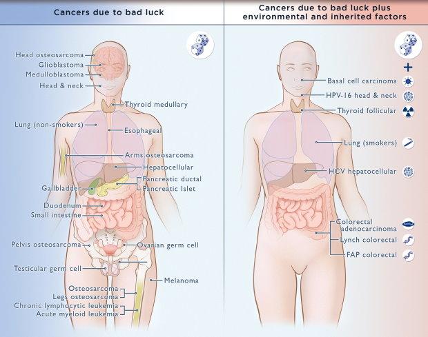 HPV és méhnyakrák | bestgumi.hu