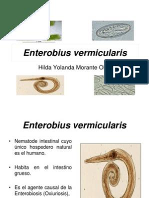 enterobius vermicularis hospedero