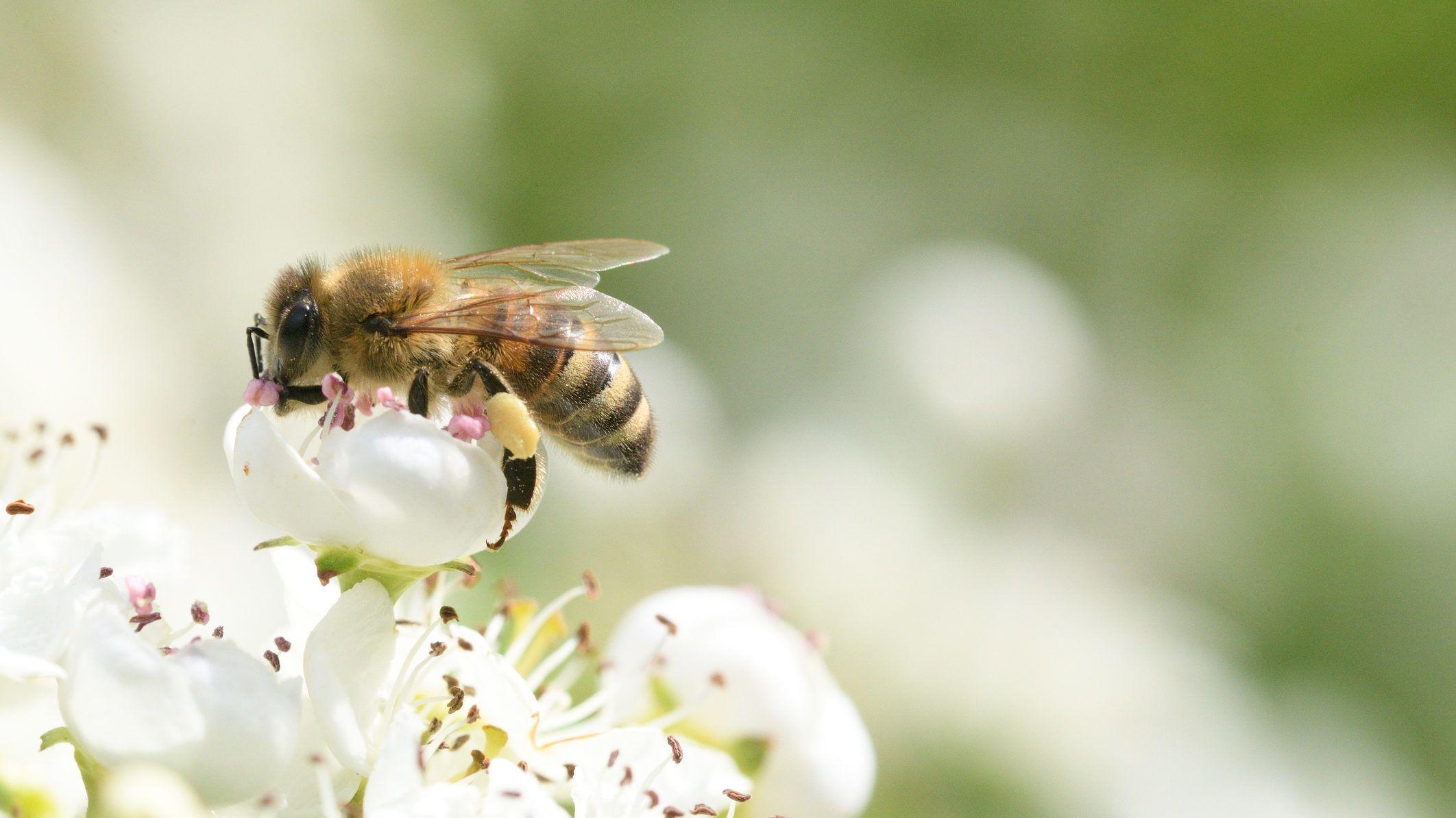 agresszív rák a méhben)
