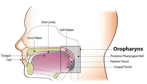tumor éve a hpv