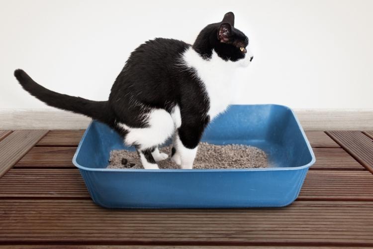 macska féreg kezelés