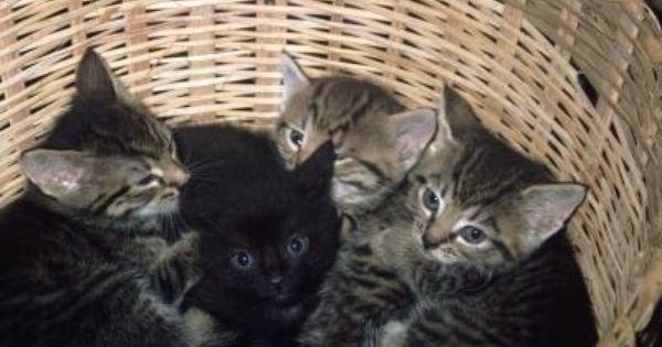 panacur giardia macskák)