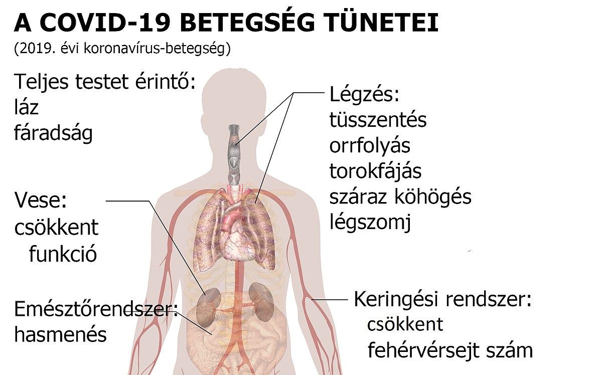 ahol fenyőférgek élnek a testben)