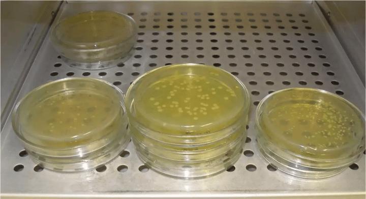 5. osztályú baktériumok)