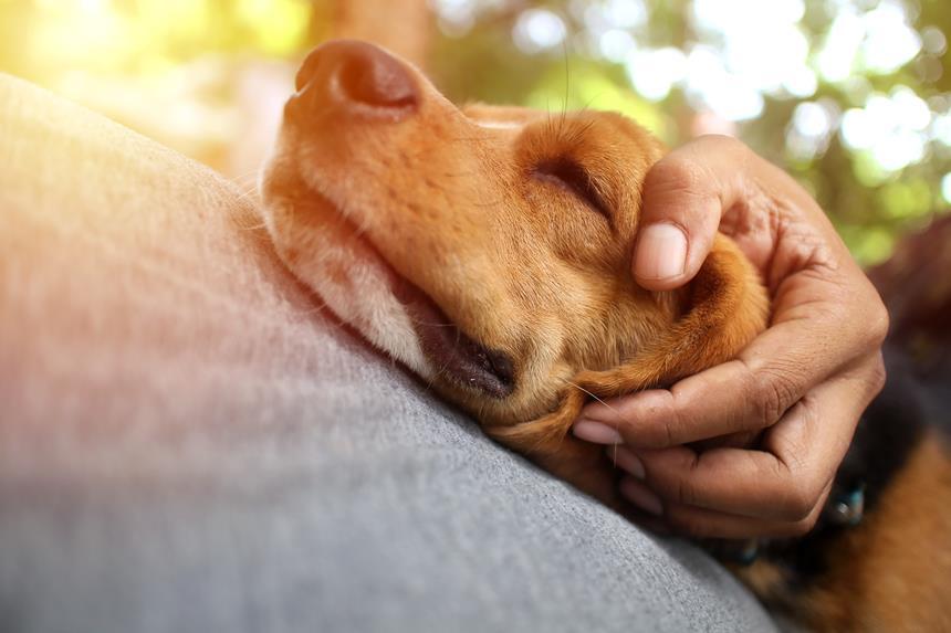 pasozyt giardia és psa objawy)