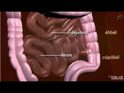 a bél helminthiasisának kezelése
