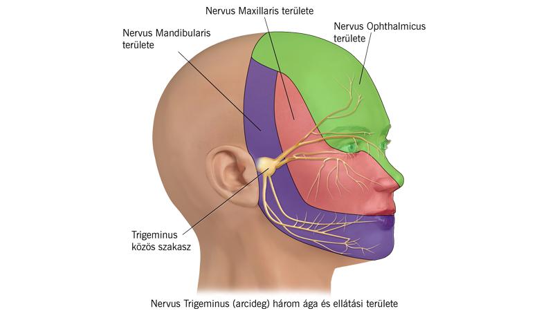mandibuláris rák tünetei condylomy papilloma