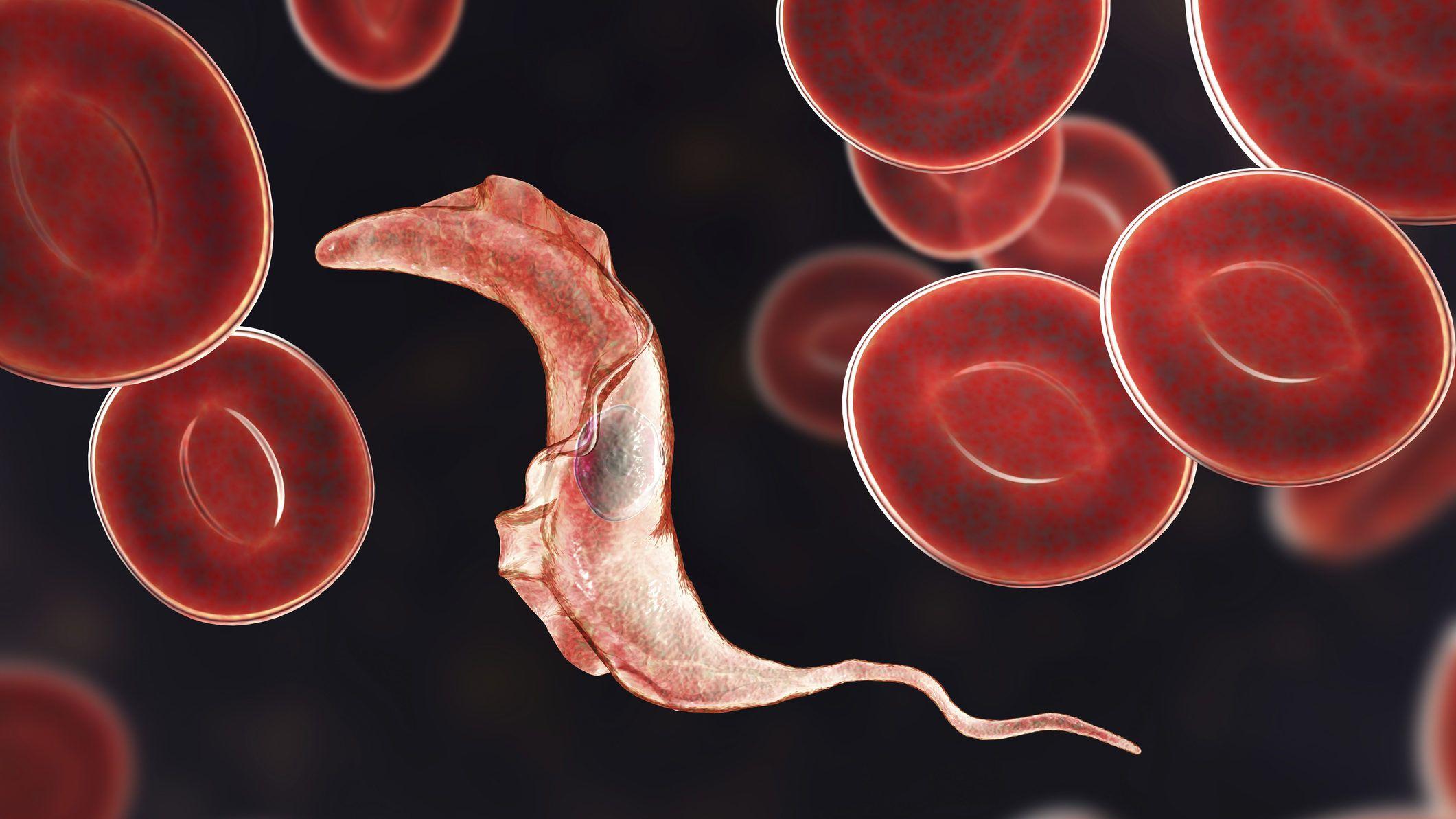 parazita kód herpetiform dermatitis duhring