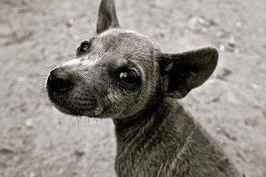 Panacur giardia bijwerkingen. Állategészségház - Vértesszőlős Giardiasis kezelése macskákban