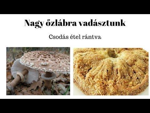 A paraziták és gombák testének tisztítása szódaval - Paraziták és gombák tisztítása