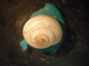 biztonságos giardini naxos strand genitális szemölcsökkel történő cauterizáció után viszketés