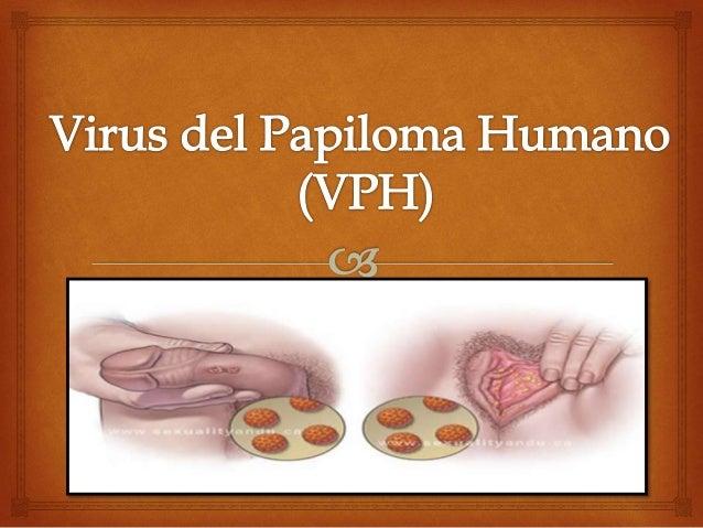 genitális papilloma vírus orrszarvú lovakon