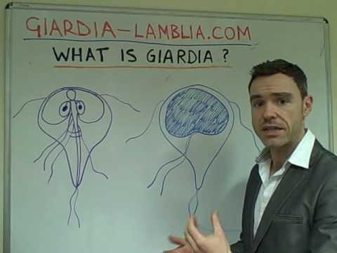 giardia antigén
