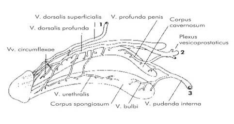 Condyloma nemi betegség   nlc